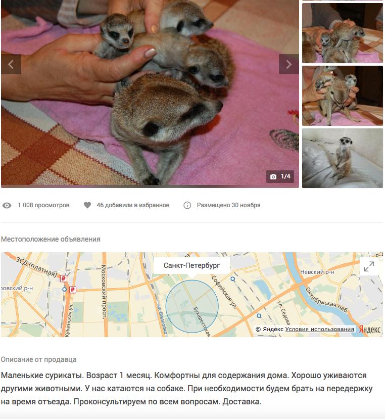 Сурикаты, 35 тысяч рублей. Фото Скриншот youla.io/sankt-peterburg
