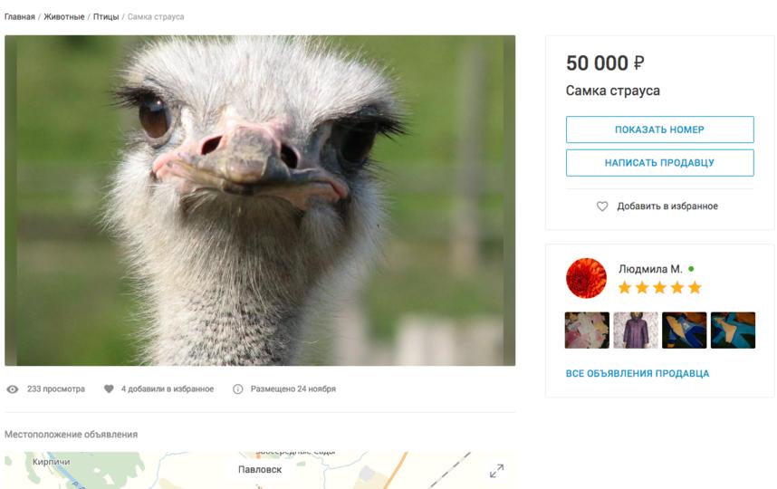 Самка страуса, 50 тысяч рублей. Фото Скриншот youla.io/sankt-peterburg