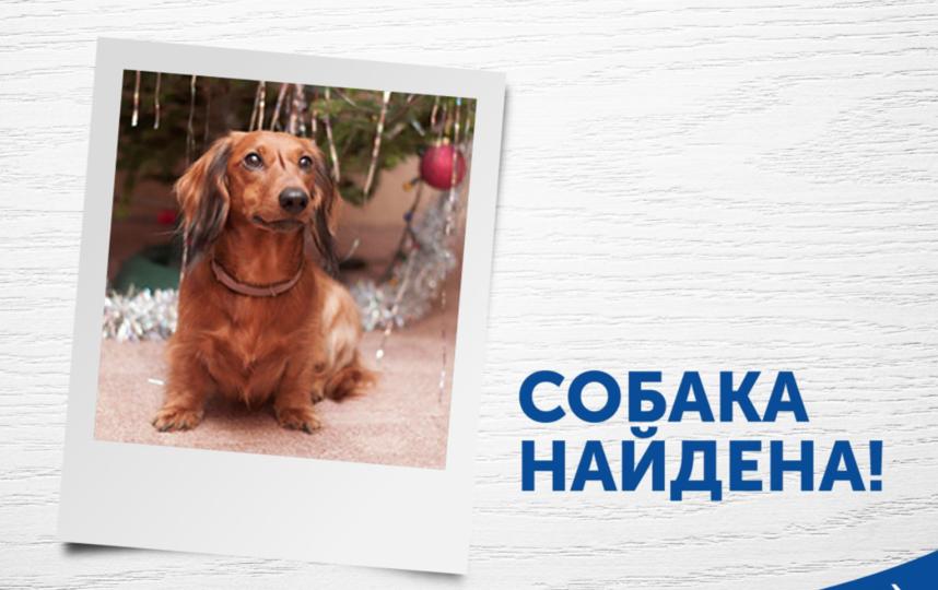 """Такса вернулась к хозяевам. Фото страничка компании """"Аэрофлот"""" в Facebook"""