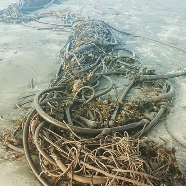 """""""Морского змея"""" находят и в других точках мира. Фото Скриншот Instagram: @seraph1sin"""