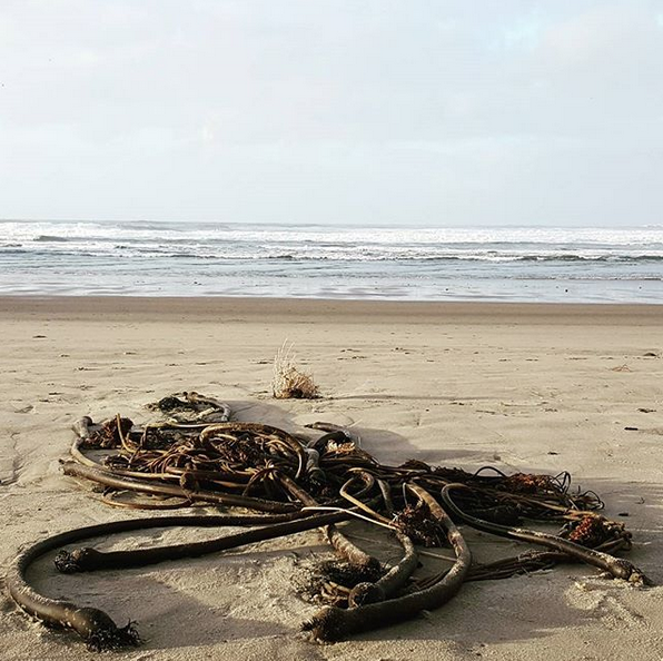 """""""Морского змея"""" находят и в других точках мира. Фото Скриншот Instagram: @handmadebykristen"""