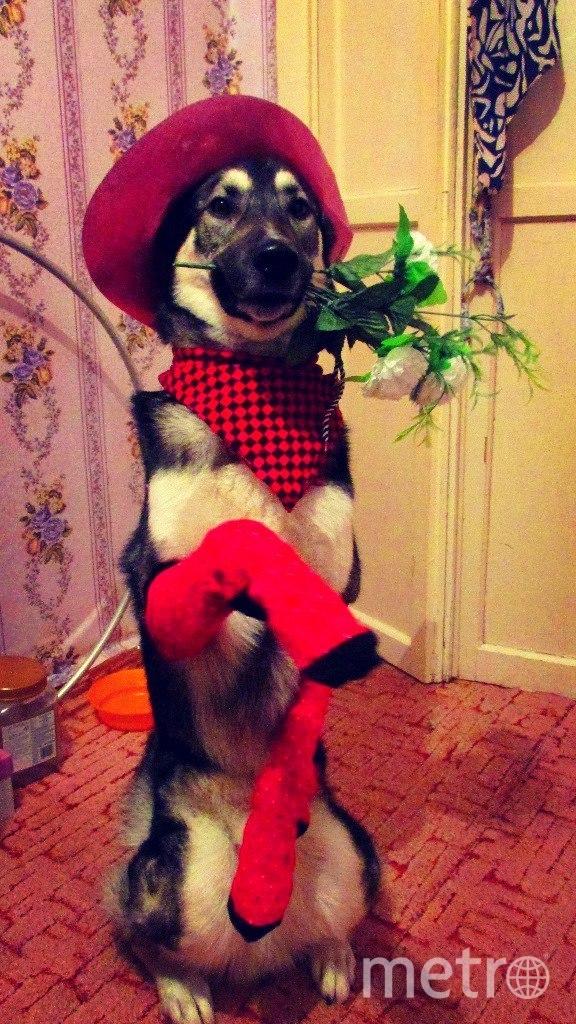 """Сейчас Каспер – воспитанный пёс, талантливый артист и лучший друг и помощник своей хозяйки. Фото Алена Бобрович, """"Metro"""""""