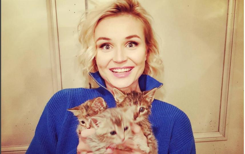 Полина Гагарина раздала котят. Фото instagram.com/gagara1987
