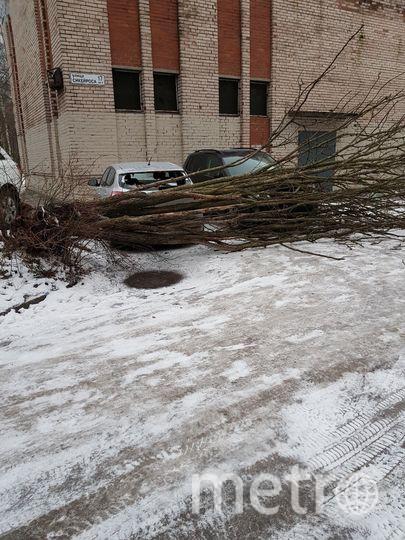 Ветер повалил дерево на Сикейроса. Фото Мегаполис / megapolisonline.ru
