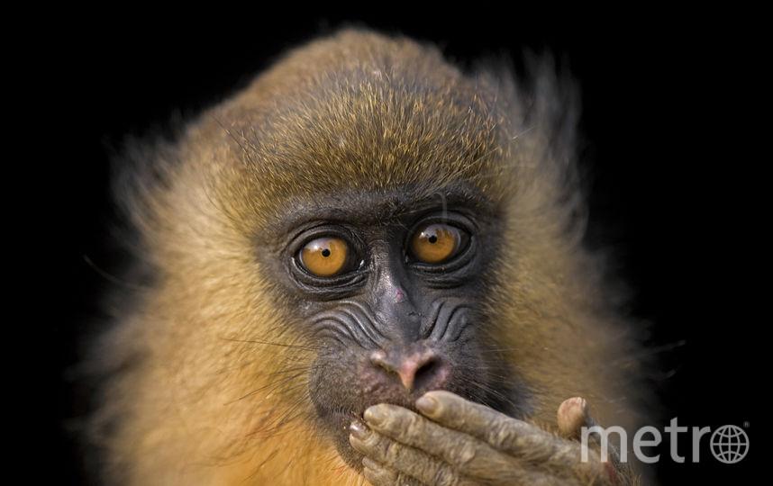 Готовое фото животного. Фото Джоэл Сарторе