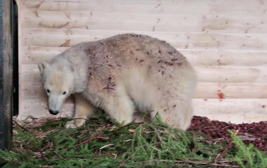 Ленинградский зоопарк. Фото Скриншот Youtube