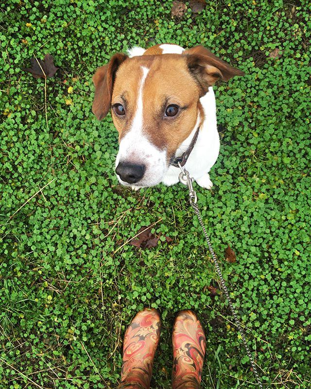 С собаками гуляют в резиновых сапогах. Фото markabombs | instagram