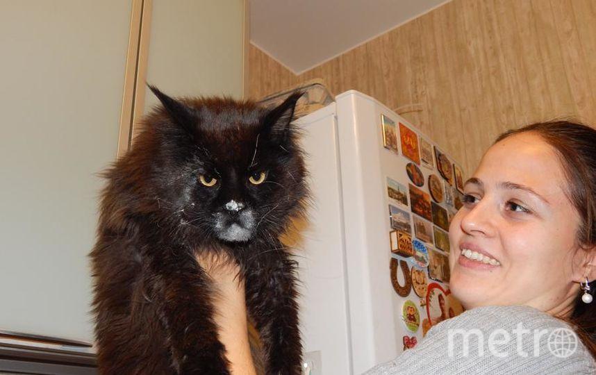 Хотим познакомить читателей любимой газеты Метро с нашим котом-воришкой Каспером (или просто Кася), породы мейн-кун. Каспер очень независимый кот и обожает своих хозяев... и их еду. Вот почему он нередко старается что-нибудь утащить с нашего стола (и это не обязательно мясные или рыбные продукты). С точки зрения Каси хорошо подойдут оливки из салата, печенье, сдобные булочки... На фото наш кот-проказник, застигнутый в момент, когда он украдкой забрался мордочкой в салатницу с тестом для пиццы. Фото Алексей и Наталья.