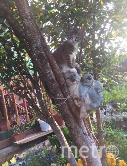 Я Ольга. Это наш любимый котёнок Амур! Он обожает лазить по деревьям, особенно сидеть на этой вишне на панде.