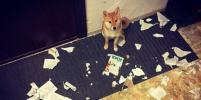 Коты-хулиганы и собаки-вредители: фото петербуржцев на конкурс