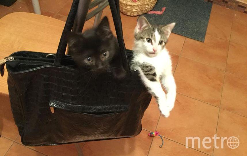 Мы немножко похулиганили у тебя в сумке мы больше не будем это мои котята ну очень шустрые.
