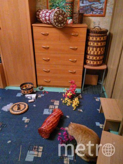 Наш кот Макс настоящий хулиган! Когда ему грустно одному дома, он начинает все, что плохо лежит, сбрасывать на пол. Фото Татьяна, СПб
