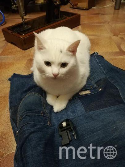 Меня зовут Наталья. Это мой любимец - котик Тихон (вообще у меня их трое) . Ему два года. Мне его подарили, когда у меня умер мой кот, и я сильно переживала и плакала. И как выяснилось, Тиша родился в тот же месяц. И я верю что частичка души того кота передалась Тихону, есть некоторые повадки. И вот я как-то раз обшивала свой старый рюкзак. Машинка швейная тяжёлая, поэтому приходится все делать на полу. И стоило мне только отойти, как Тиша уже занял местечко на булавках.