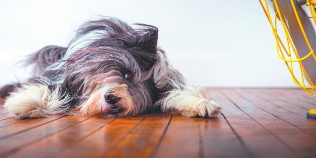 Собаки + вентилятор = веселье.