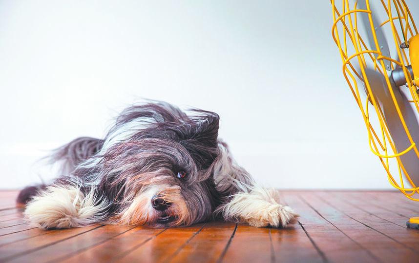 Собаки + вентилятор = веселье. Фото Иллона Хаус