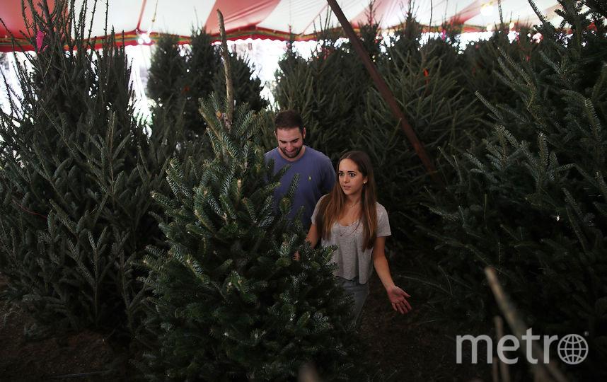 И даже в Майами закупают елки к празднику. Фото Getty