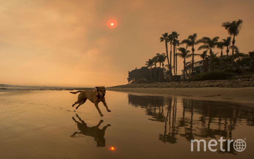 Астрологи рассказали, как встретить год Собаки.
