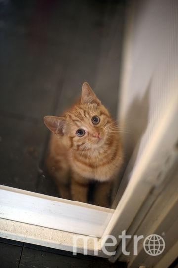 Всего в квартире было заперто порядка 30 кошек. Фото Getty