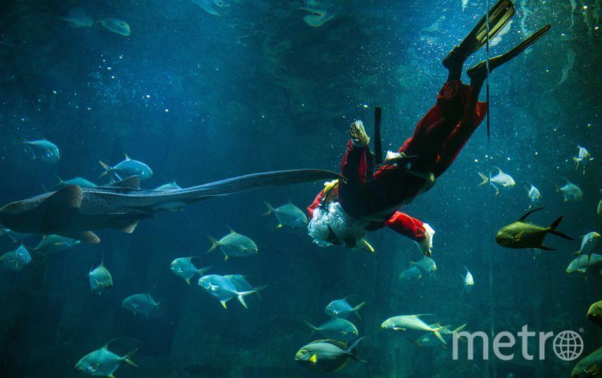 Санта-Клаус погружается в Парижский аквариум. Фото AFP