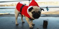 Новый год Собаки: как правильно встречать