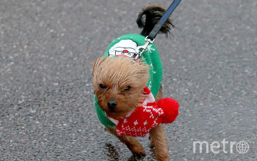 Символ года - жёлтая земляная собака. Фото Getty