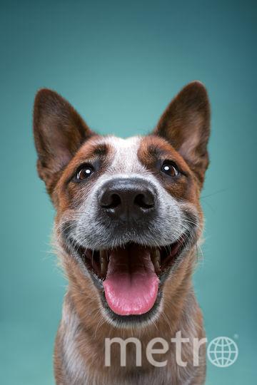 Забавный портрет собаки. Фото Александр Хохлов