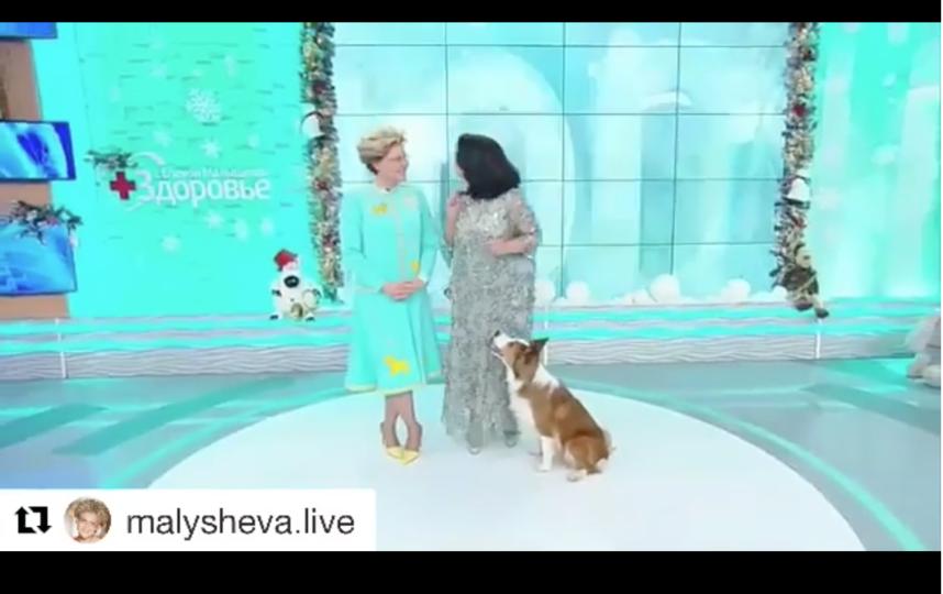 Видео поделилась Елена Малышева. Фото instagram.com/malysheva.live