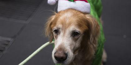 2018-й год - Год Собаки. Фото Getty