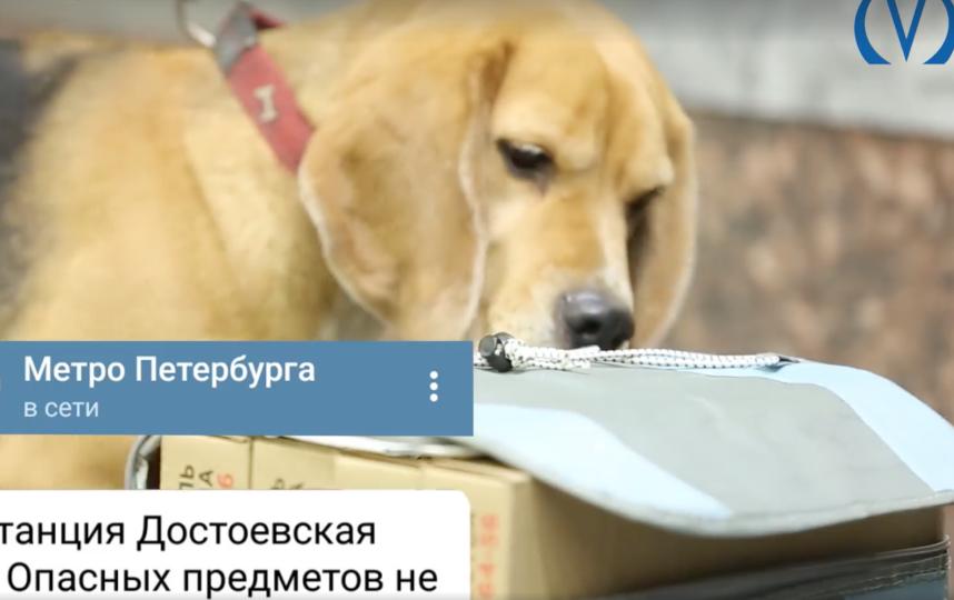Пресс-служба метрополитена.