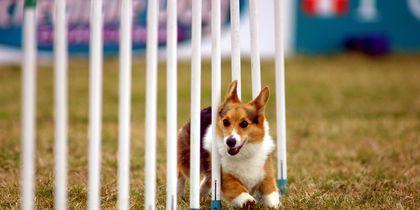 Стартует год Собаки. Фото Getty