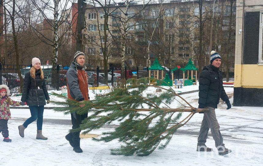 В Петербурге новогодние ёлки пригодятся медведям и львам. Фото Фото предоставлено организацией «Мусора. Больше. Нет».