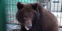 В Петербурге новогодние ёлки пригодятся медведям и львам