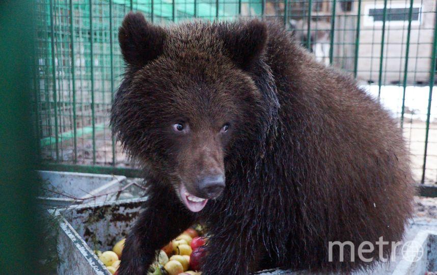 В Петербурге новогодние ёлки пригодятся медведям и львам. Фото Фото Сергея Овчинникова, предоставлено центром «Велес»