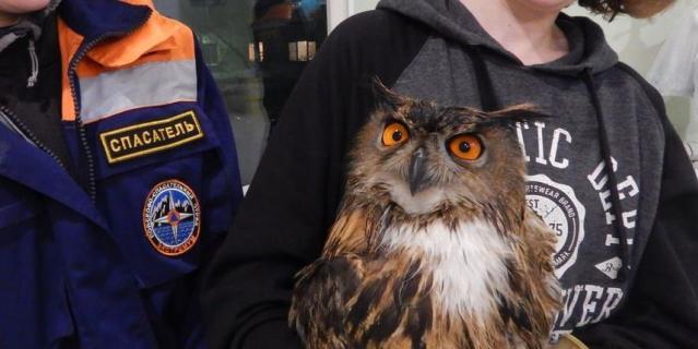 В Петербурге спасли двух редких хищных птиц
