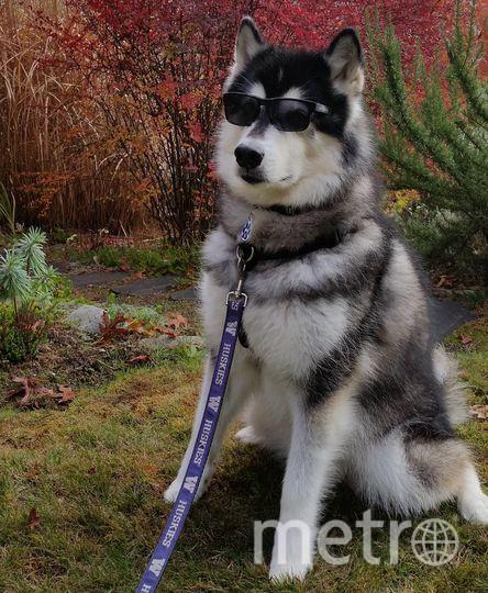"Пёс Дабс. Фото ""Инстаграм""."