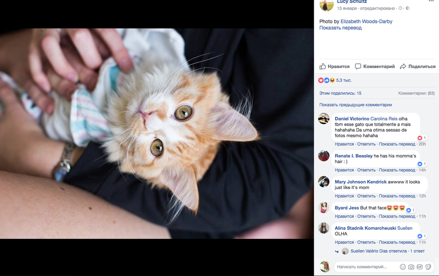 Американка родила котёнка. Фото www.facebook.com/LucyWSchultz, @Elizabeth.WoodsDarby