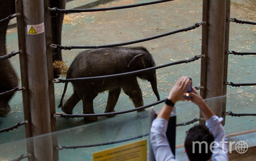 Студенты смогут посетить Московский зоопарк бесплатно. Фото Василий Кузьмичёнок