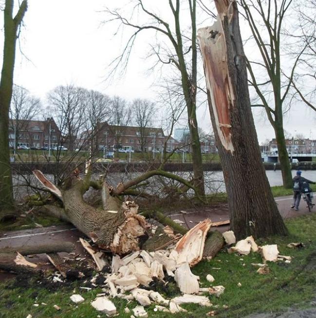 Ураган в Голландии. Фото Instagram @fanteality