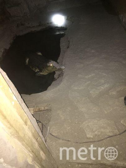 Крокодил в подвале. Фото 78.мвд.рф