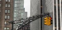 Рост городов заставляет животных эволюционировать