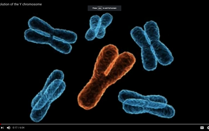 Упрощённое изображение X- и Y-хромосом. Фото Скриншот Youtube