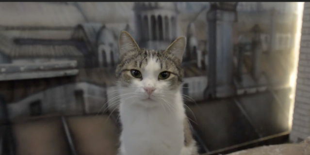 У петербургских котов появилось своё видео