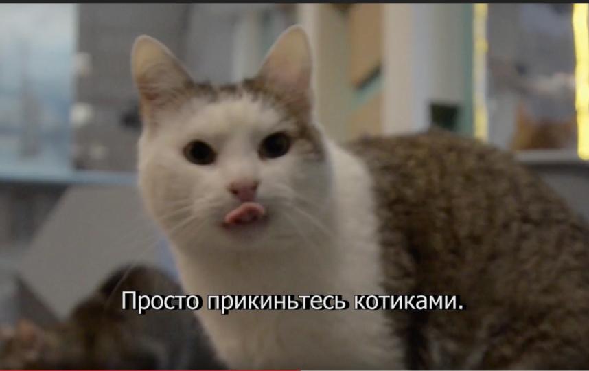 Скриншот видео YouTube / catmuseum. Фото Скриншот Youtube
