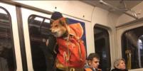 Мода в московском метро: Лучшие фото из соцсетей