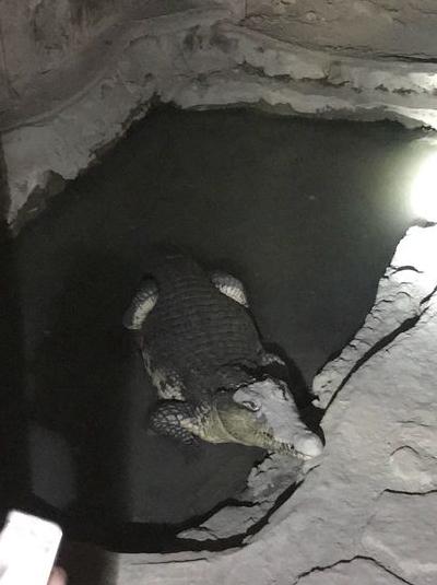 "Петербуржца накажут за то, что он не чипировал ""розовощекого"" крокодила. Фото 78.мвд.рф"