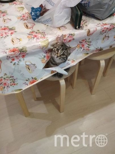 . У меня есть кот Тимофей, которому 4 месяца от роду, но он уже активно проводит свои будни. Одно из любимых занятий это залезть на стену и разодрать обои, посидеть в раковине, помедитировать, так же сделать новые дыры в несчастной скатерти. В целом я очень люблю своего кота, потому что с ним тепло и весело.. Фото Рожина Марина.
