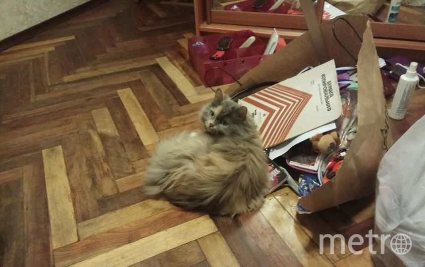 Это наша кошка Фрося. Ей 12 лет, а играется как котенок). Обожает коробки, пакеты, лазает по шкафам, бегает за мячиком, любит сидеть в горшках с цветами и смотреть в окно. В общем, игруля и хулиганка. Вот и на снимке она во всей красе. Фото Пименовы Наталья и Вероника.