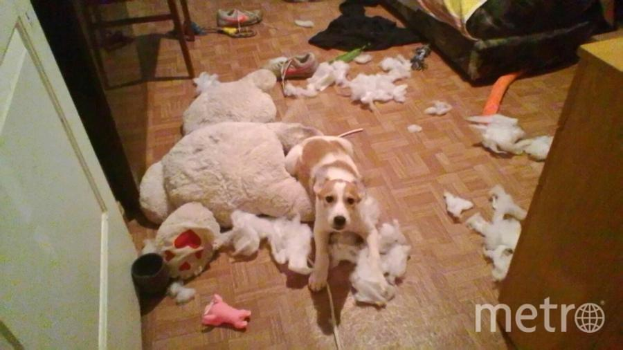 Это кто сделал? Арчи! Медведь взорвался,но ни кто не пострадал!