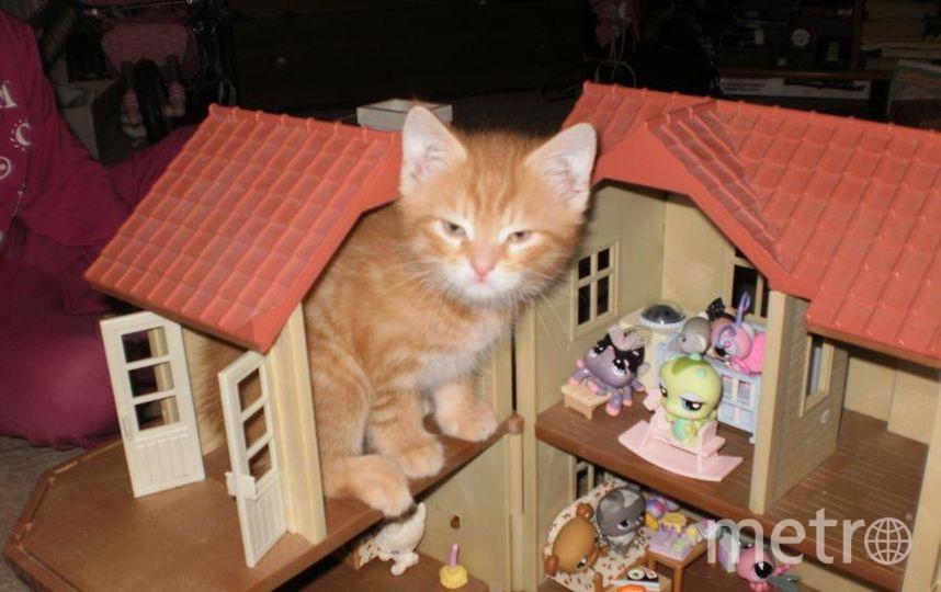 Сейчас этот хулиган, которого зовут Рыжий, превратился в важного кота, но в былые времена...
