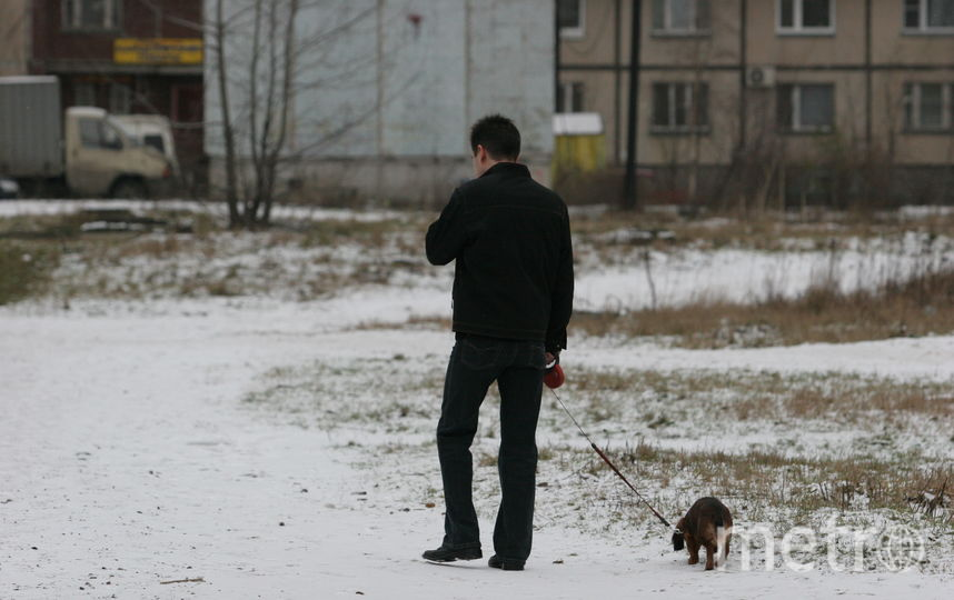 """Животных выгоняют из парков. Фото Святослав Акимов, """"Metro"""""""